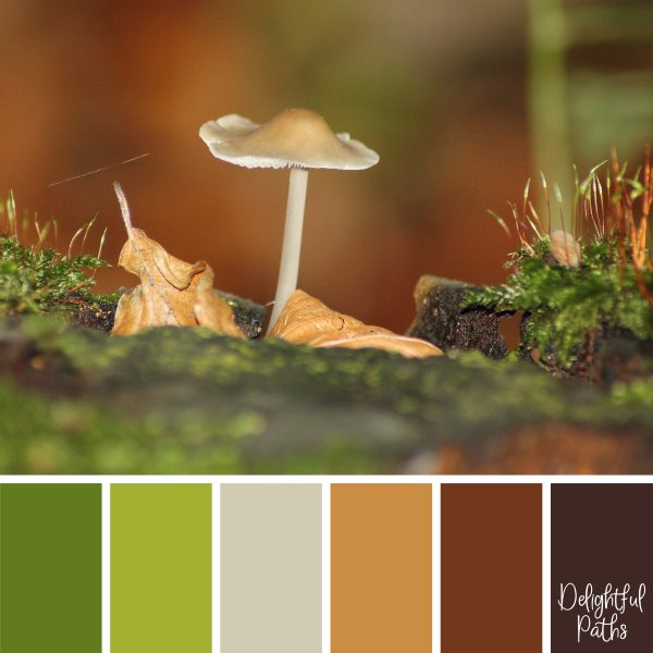 Toadstool And Moss fall/ autumn color palette