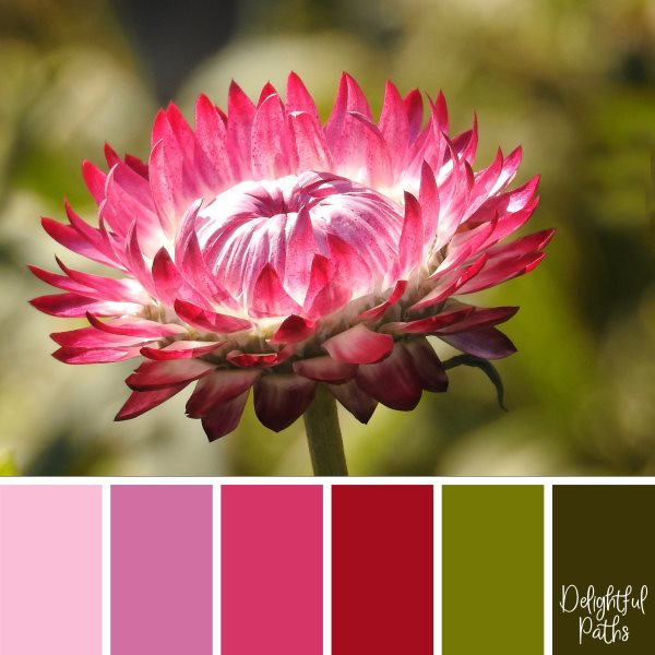 Pretty Pink Autumn Flower fall/ autumn color palette