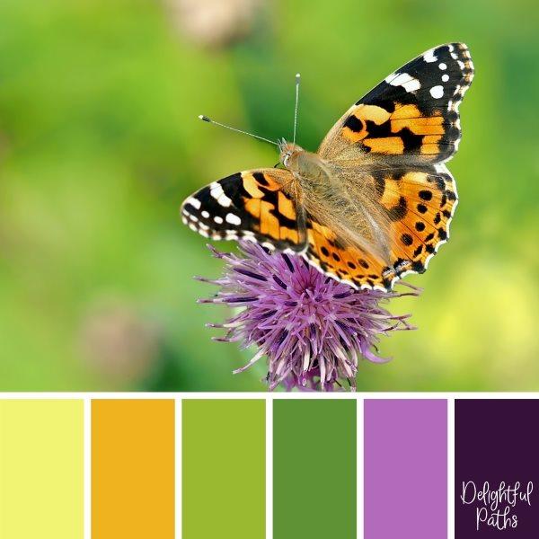 Butterfly On A Purple Flower Color Palette Inspiration
