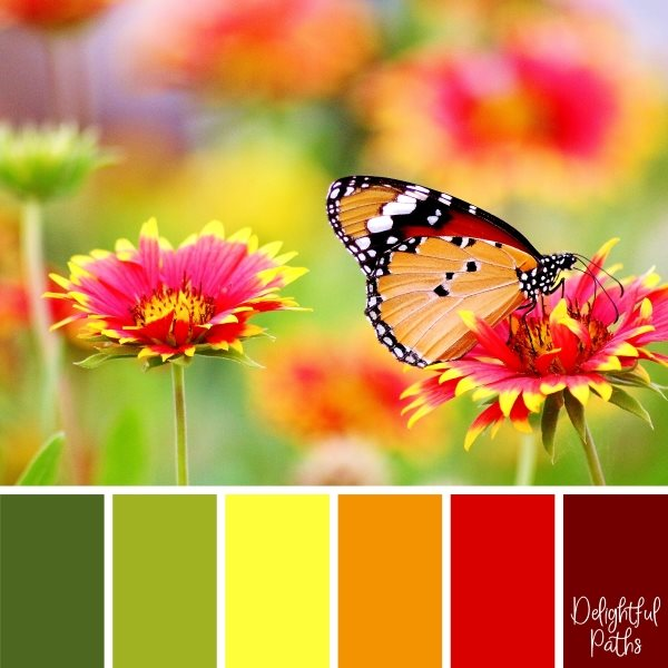 Butterfly On Red And Yellow Flowers Color Palette Inspiration