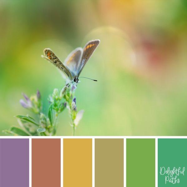 Butterfly On Purple Flower Color Palette Inspiration