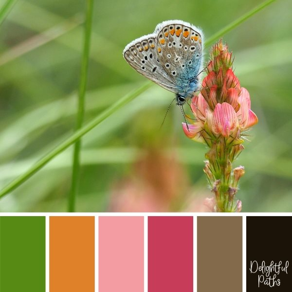 Butterfly On Pink Flower Color Palette Inspiration