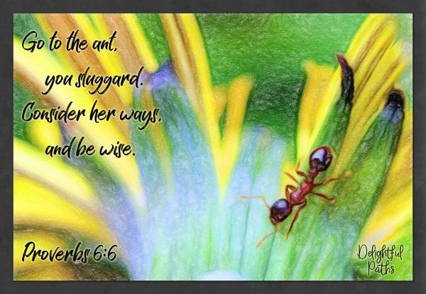 Proverbs 6:6 wisdom Bible verses DelightfulPaths.com
