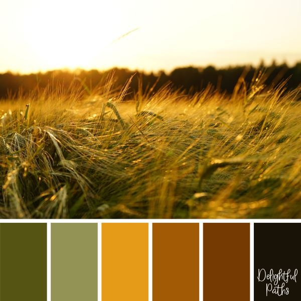 Golden Field of Barley Ready for Harvest - harvest / thanksgiving color palette DelightfulPaths.com