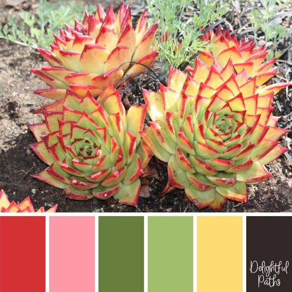 Pretty Red And Green Succulent succulent color palette DelightfulPaths.com