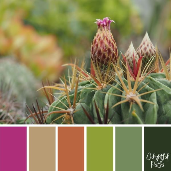 Cactus With A Pink Flower Bud succulent color palette DelightfulPaths.com
