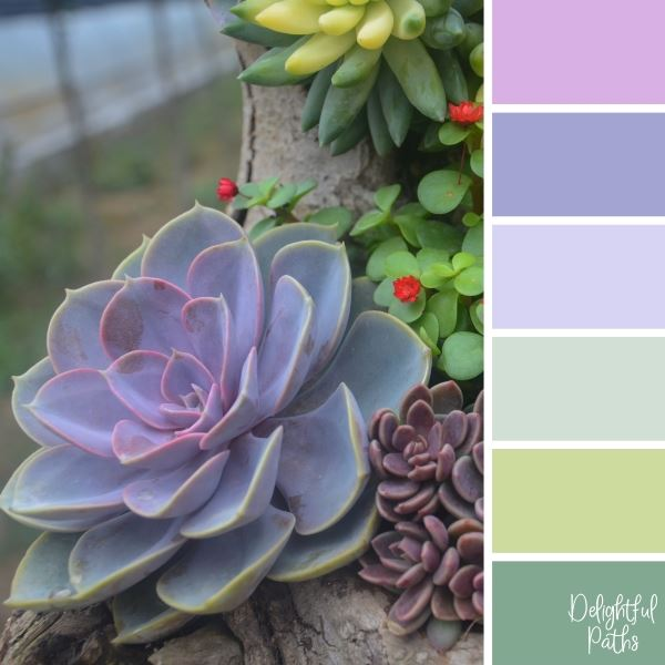 Mauve And Pink Succulents succulent color palette DelightfulPaths.com