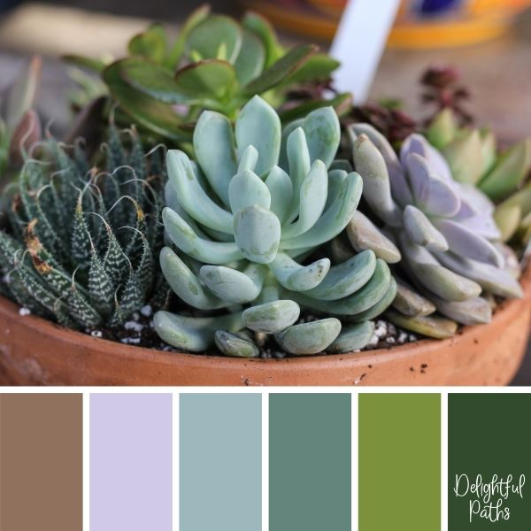 Pot Of Blue, Mauve, And Green Succulents succulent color palette DelightfulPaths.com